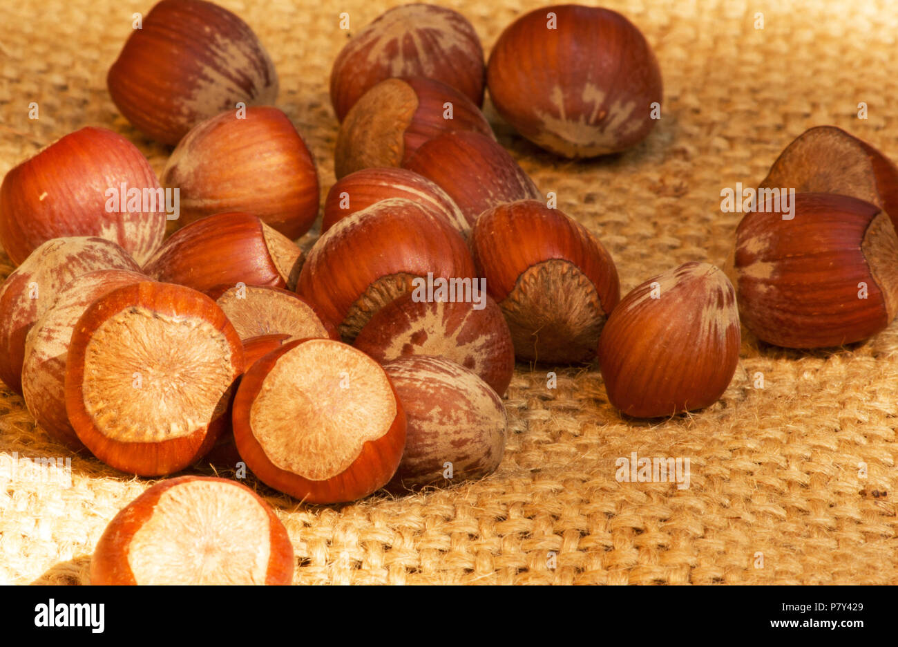 Hazelnuts on burlap - Stock Image