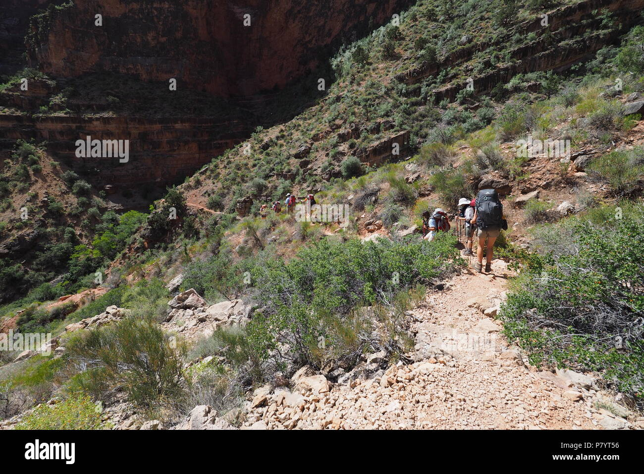 Backpackers descending the Grandview Trail between Horseshoe Mesa and Page Spring in Grand Canyon National Park, Arizona. - Stock Image