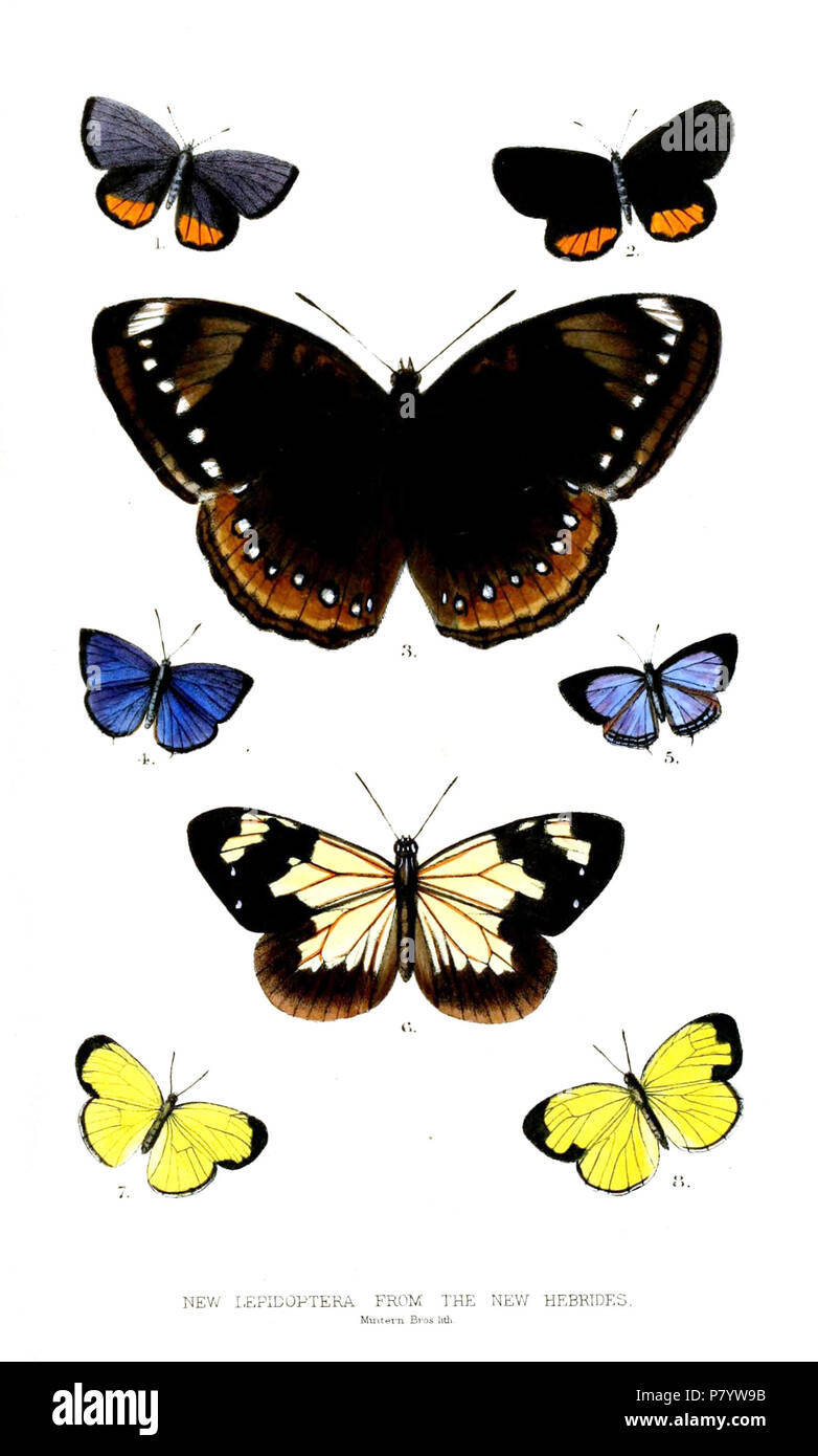 New Hebrides Lepidoptera 1&2 Scotitantides excellens 3 Diadema perryi 4&5 Lampides carissima 6 Danais hebridesia 7 Terias pumilaris 8 Terias hebridina . 1875 244 LepidopteraHebrides - Stock Image