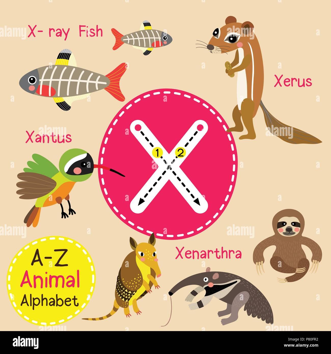 x animal aumenta o tamanho