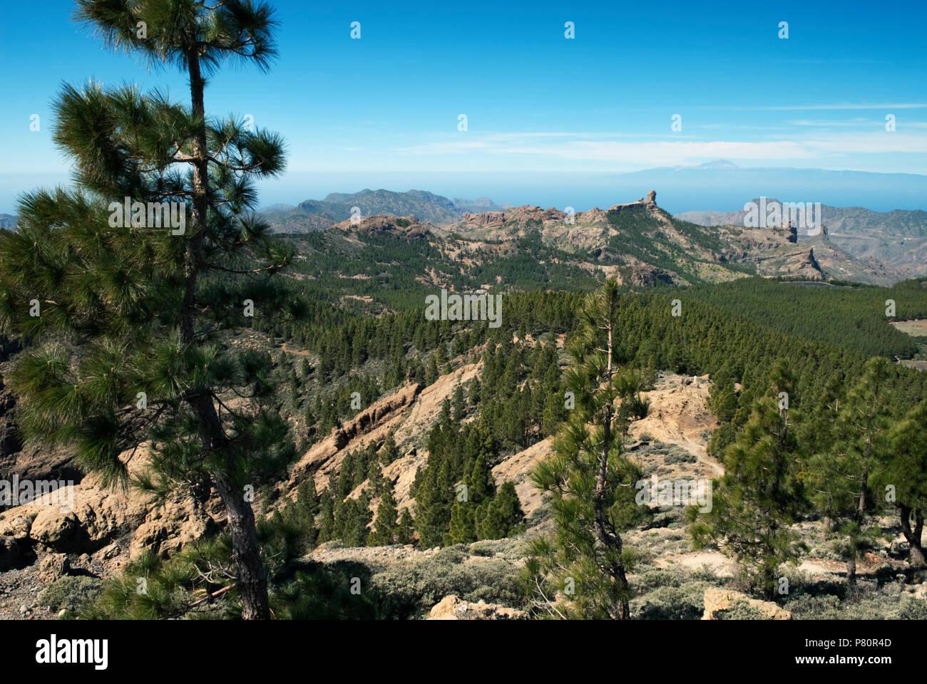 View towards Roque Nublo from Pozo de las Nieves - Stock Image
