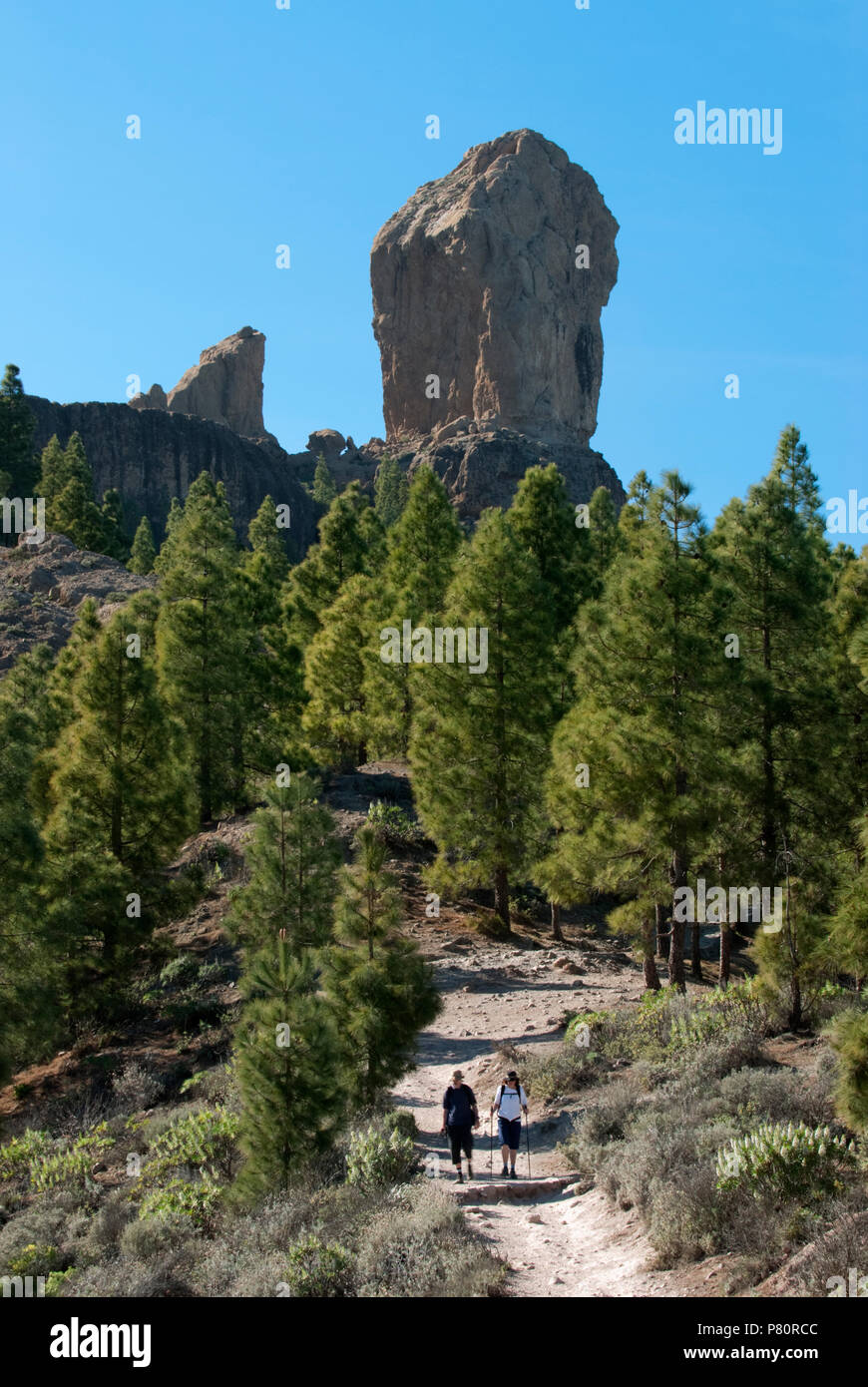 Roque Nublo and footpath through pine trees in centre of island - Stock Image