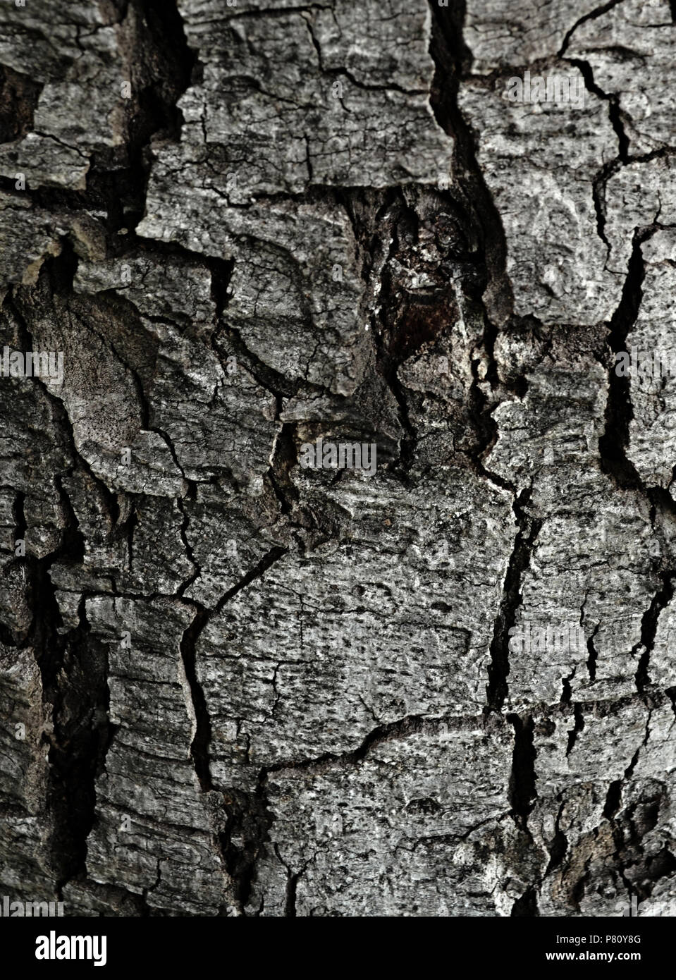 Bark surface of dead tree in nature - Stock Image