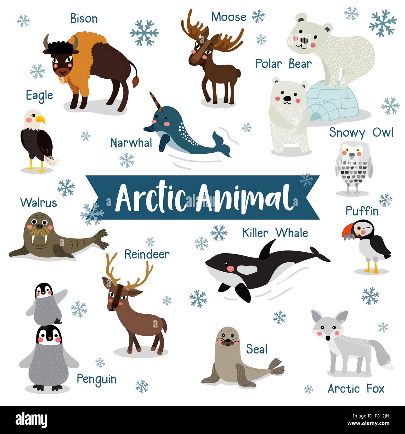 Arctic Animal cartoon on white background with animal name. Penguin, Polar Bear, Reindeer. Walrus. Moose. Snowy Owl. Arctic Fox. Eagle. Killer whale.  - Stock Image