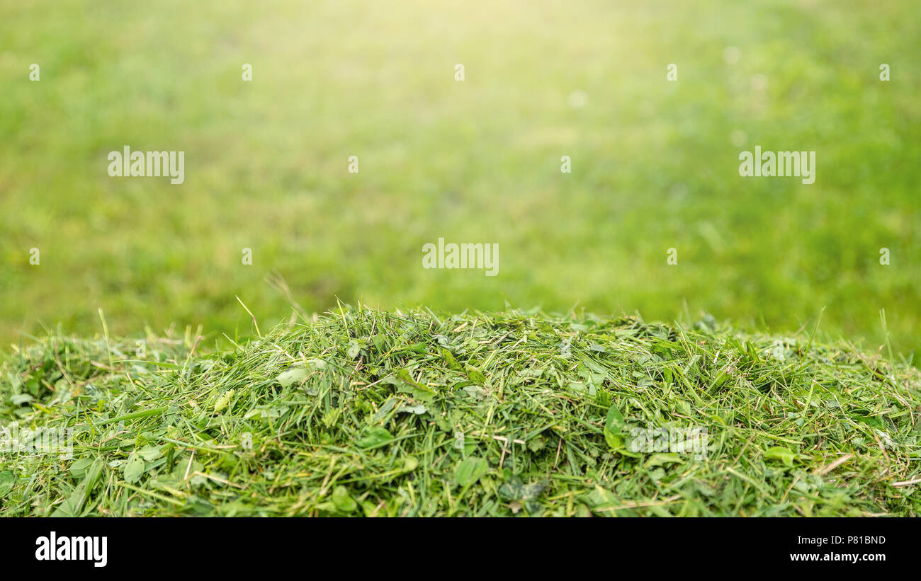 Services for lawn care, grass cutting in the garden and in the yard, banner 16x9 format with space for text - Stock Image