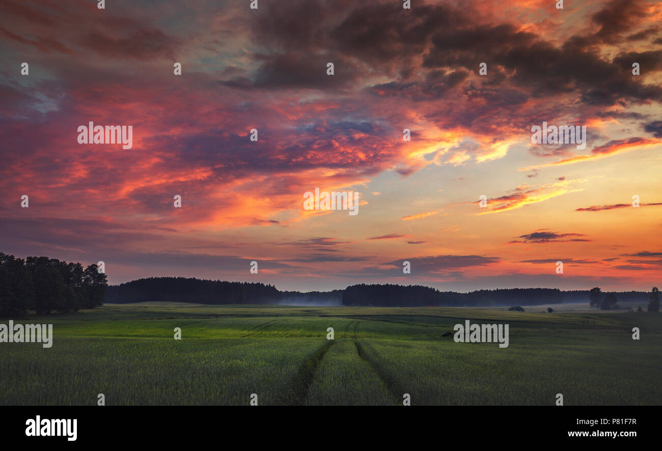 Coloroful dramatic sunset clouds over scenic misty wheat fields  at summer - Stock Image