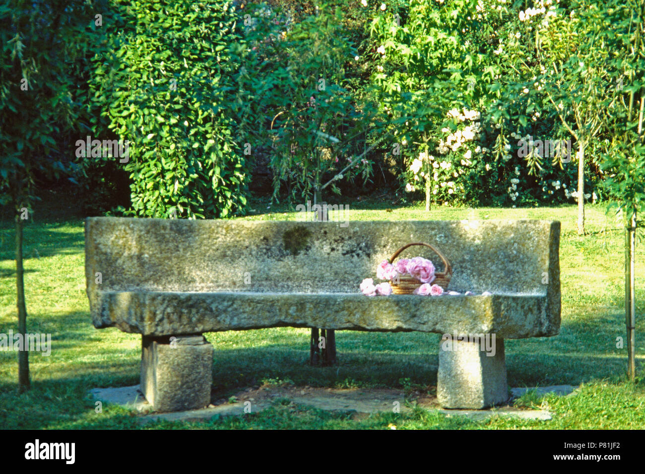 Magnificent Basket Of Pink Roses On Old Stone Bench In French Country Pabps2019 Chair Design Images Pabps2019Com