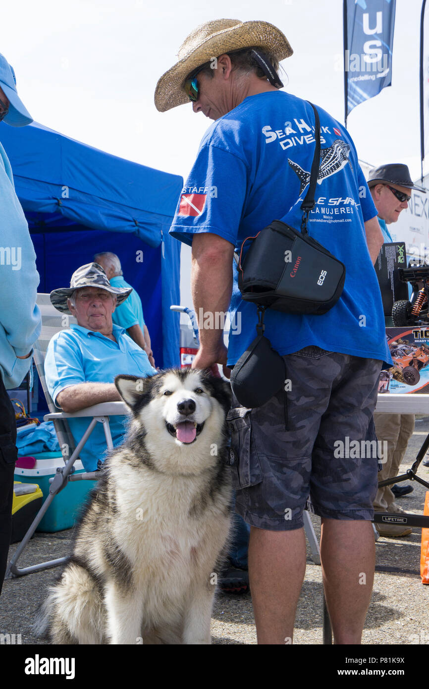Visitor with dog at Wings and Wheels Stock Photo