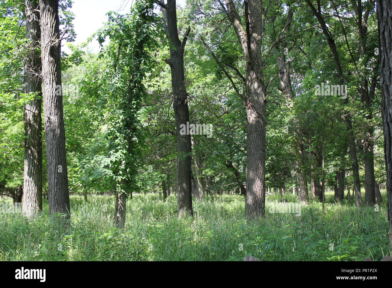 Savannah area at the North Park Village Nature Center in Chicago, Illinois. - Stock Image