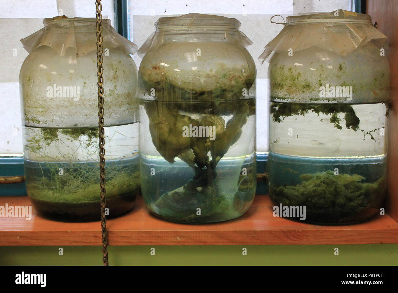 Jars full of specimens stored in a windowsill at the North Park Village Nature Center in Chicago, Illinois. - Stock Image