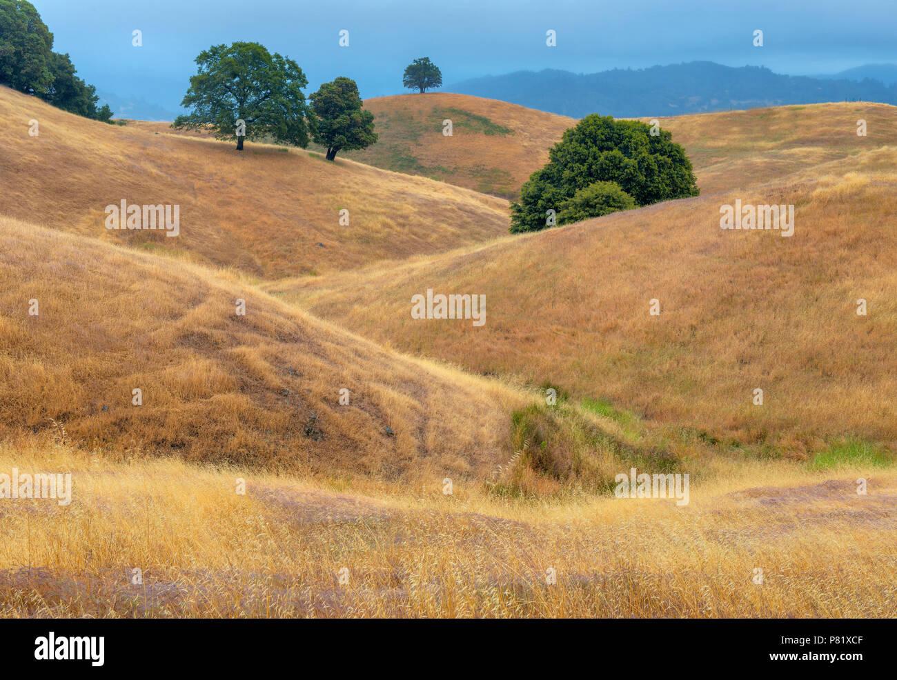 Hillsides, Acorn Ranch, Yorkville, Mendocino County, California - Stock Image