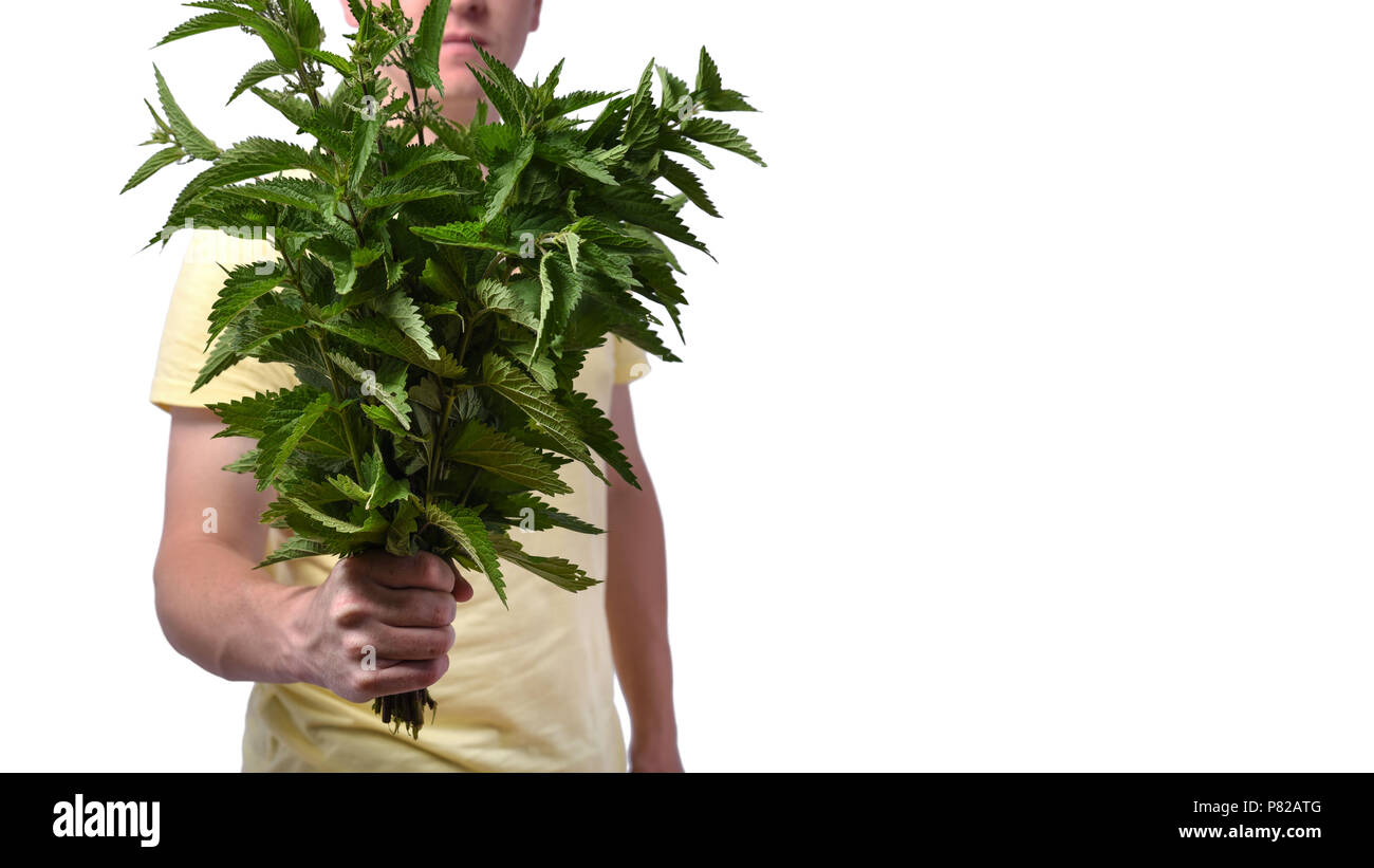 Conception - breakup of relationships, divorce. Young man with a bunch of nettle in his hand, isolated on white on white background - Stock Image