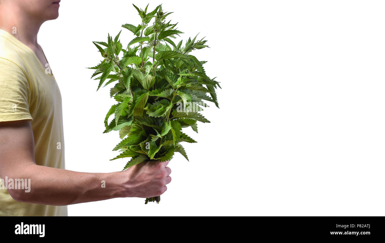 Idea - breakup of relationships and divorce. Young man with a bunch of nettle in his hand, isolated on white on white background - Stock Image