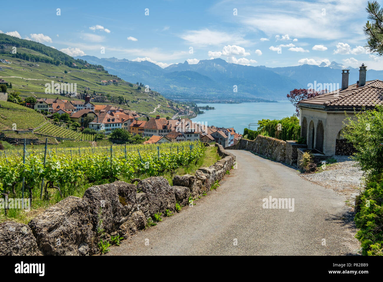 View on a little winery village called Rivaz, in the beautiful Lavaux winery area in Switzerland - Stock Image