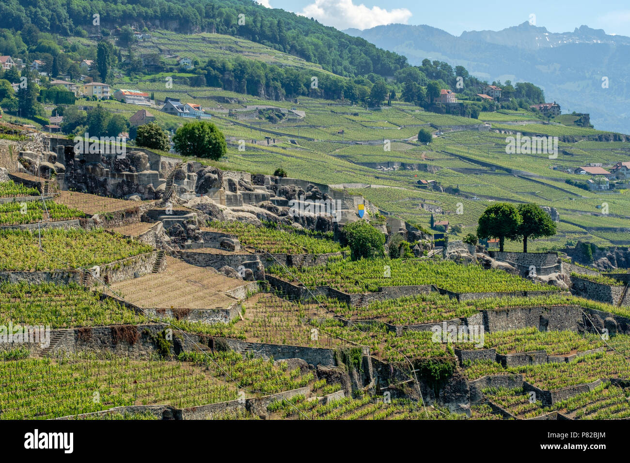 Vineyard terrasses of Lavaux, Switzerland - Stock Image