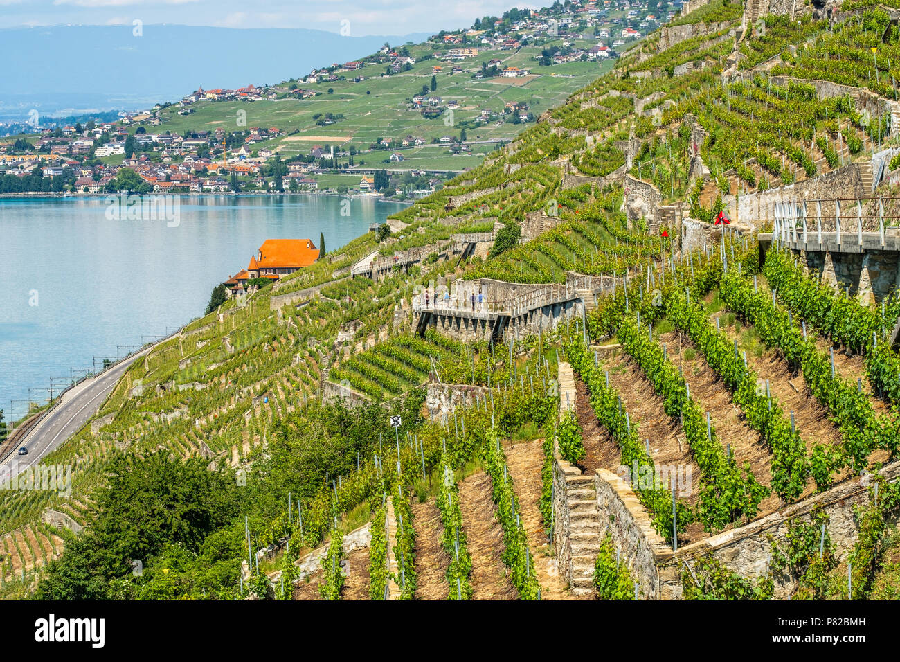 View on Lake Geneva in the direction of Lausanne from the beautiful Lavaux wine terrasses area in Switzerland - Stock Image