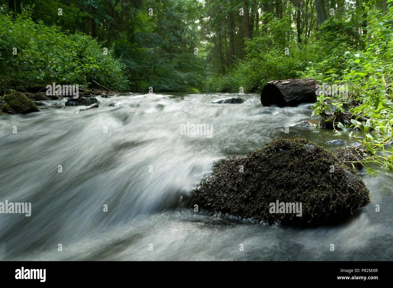 Snelstromende beek in het Bentheimer Wald; Fast flowing stream in Bentheimer Wald - Stock Image