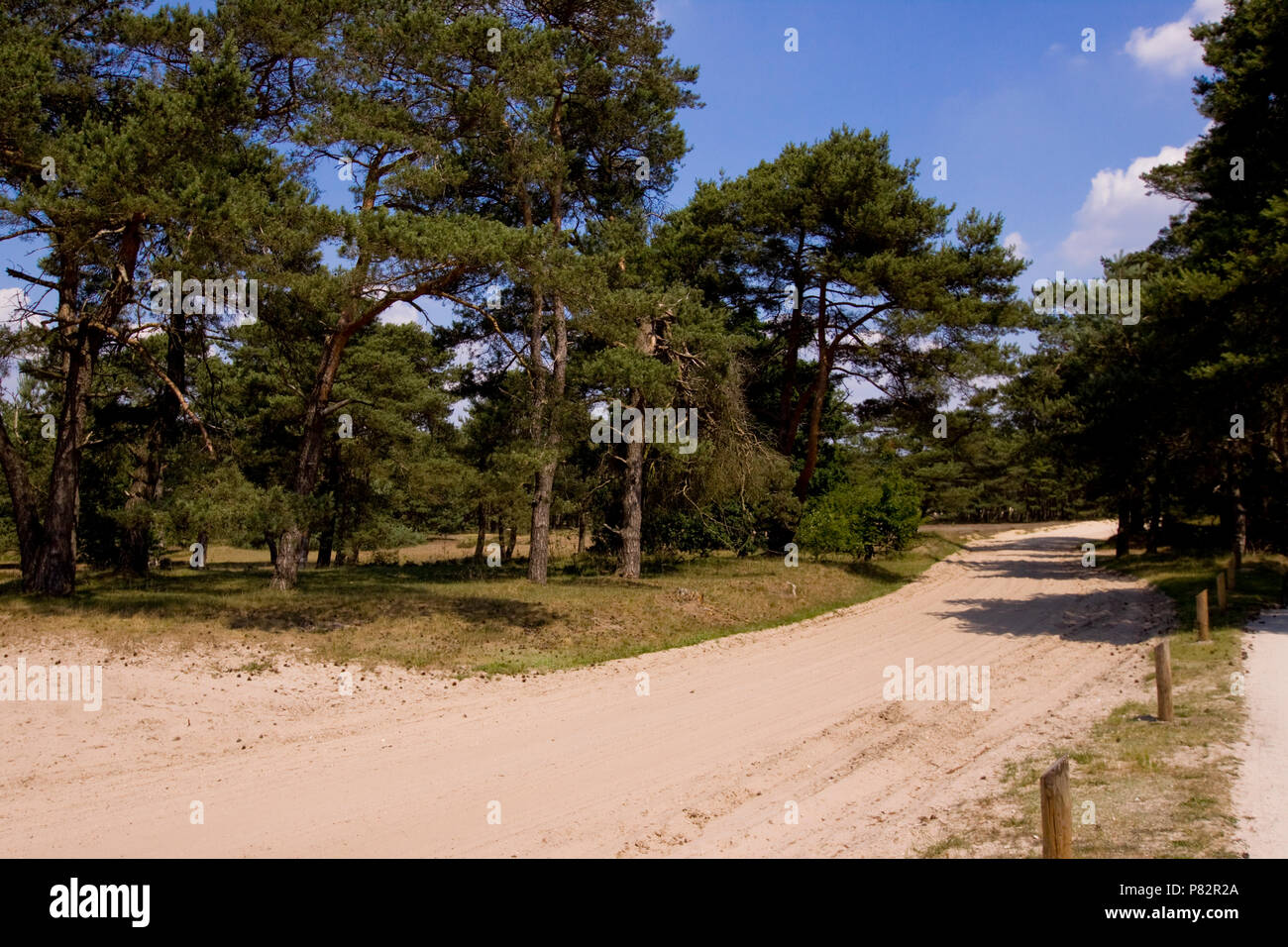 Bospad in het bos bij Havelte; Forest road in forest at Havelte - Stock Image