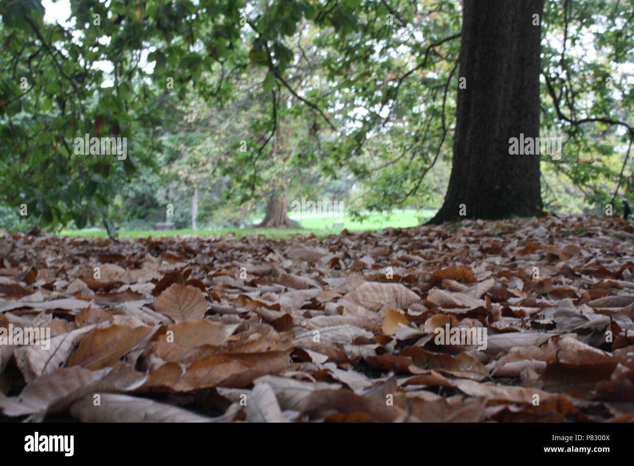 Close up of fallen leaves at the park - Stock Image