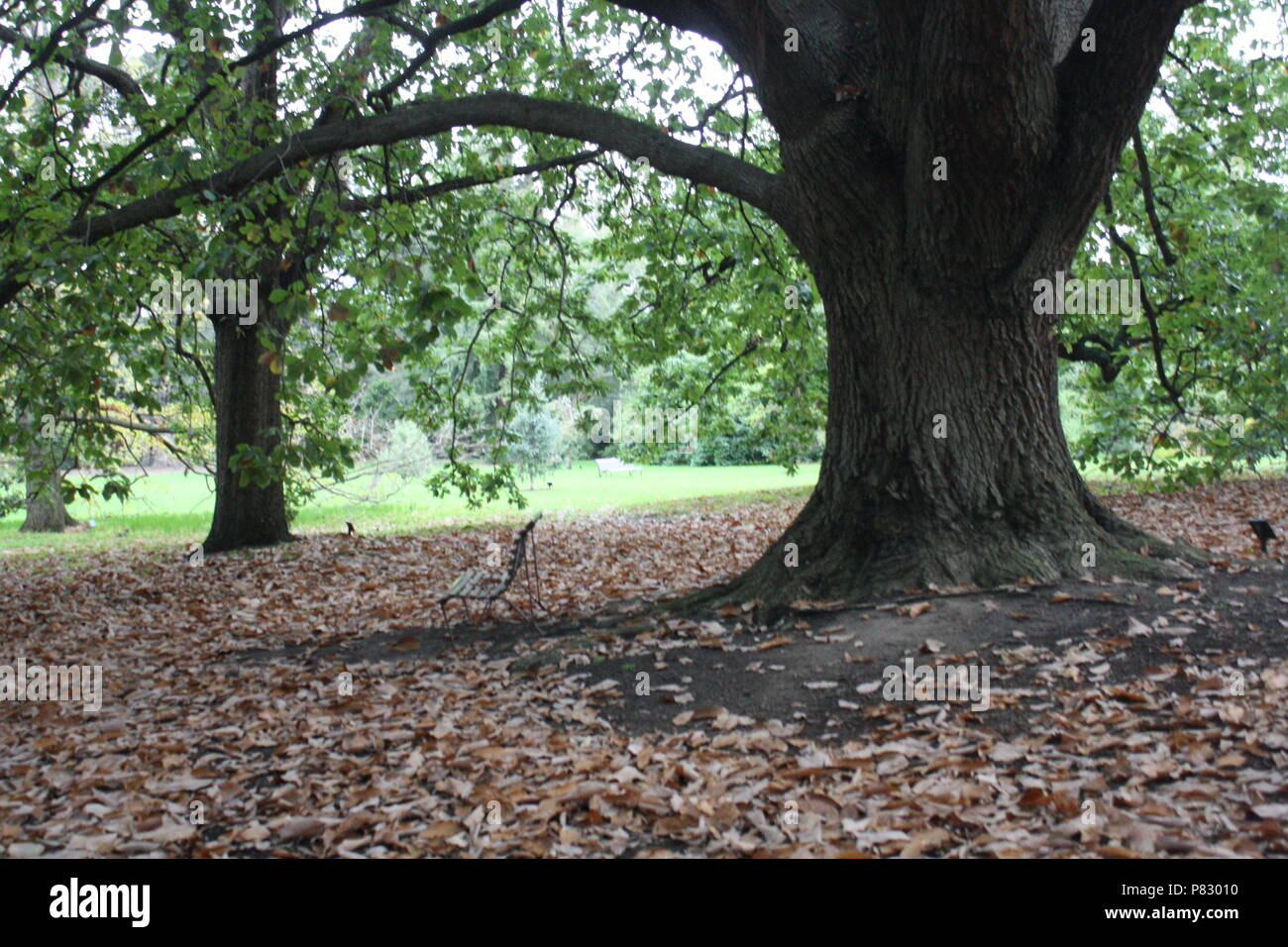 Trees in the park in Autumn - Stock Image