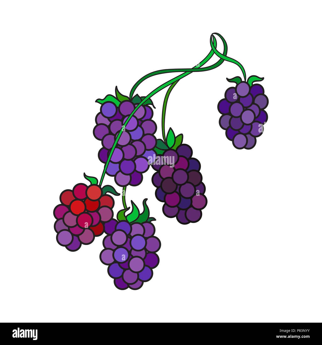 Illustration of raspberries on the stem against a white background. - Stock Image
