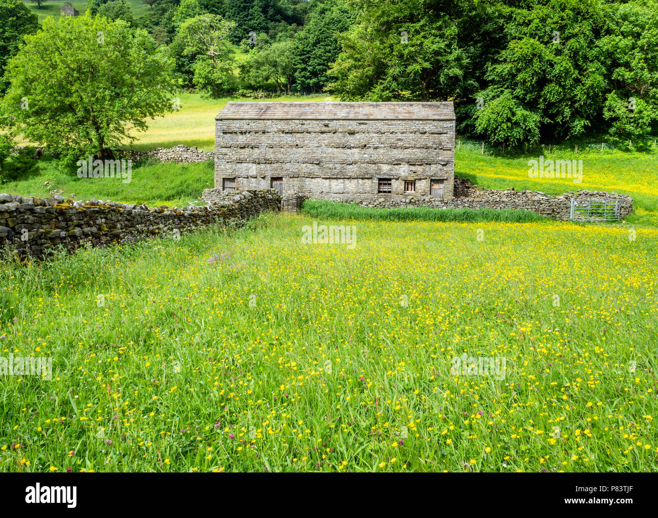 Flowery meadows and field barn near Muker in upper Swaledale in the Yorkshire Dales UK - Stock Image