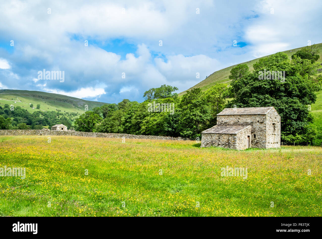 Flowery meadows and field barns near Muker in upper Swaledale in the Yorkshire Dales UK - Stock Image