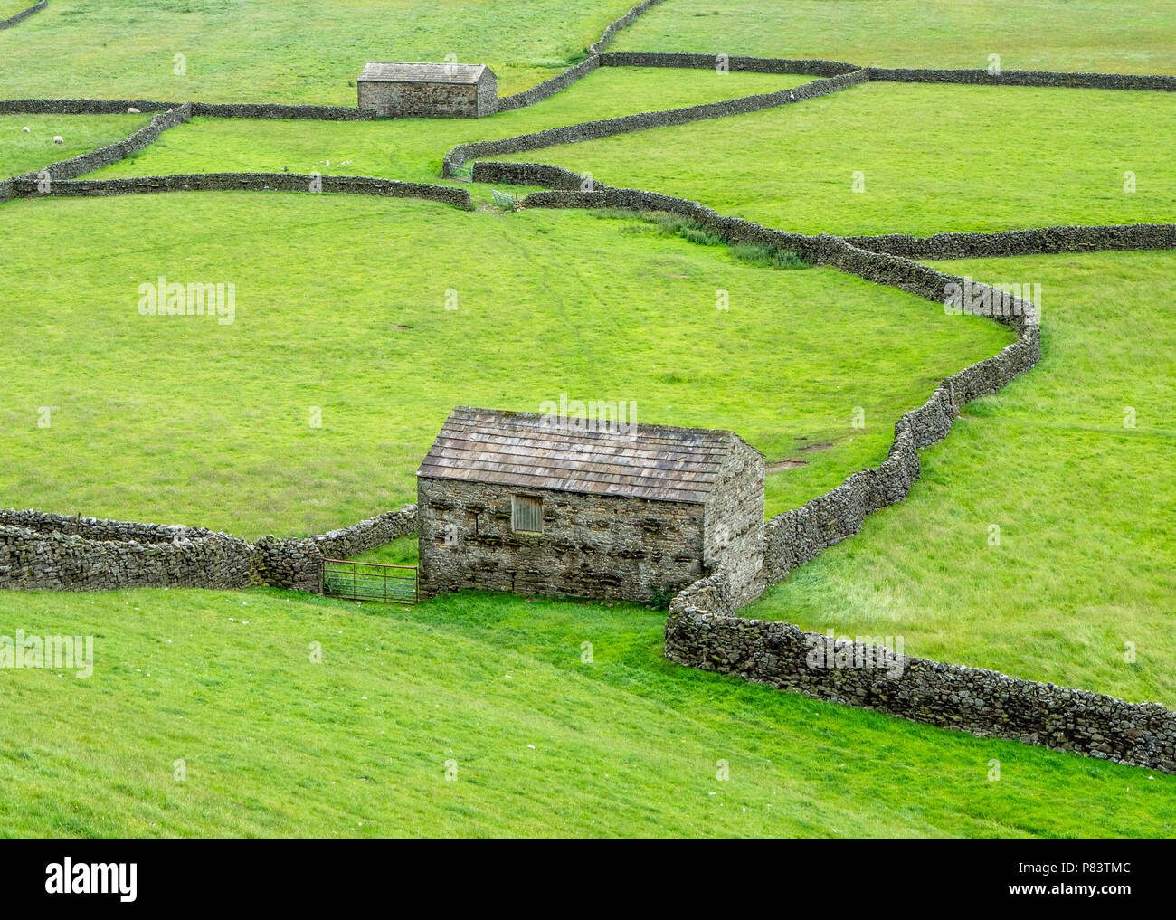 Field barns built to house overwintering cattle at Gunnerside Bottoms in upper Swaledale in the Yorkshire Dlaes UK - Stock Image