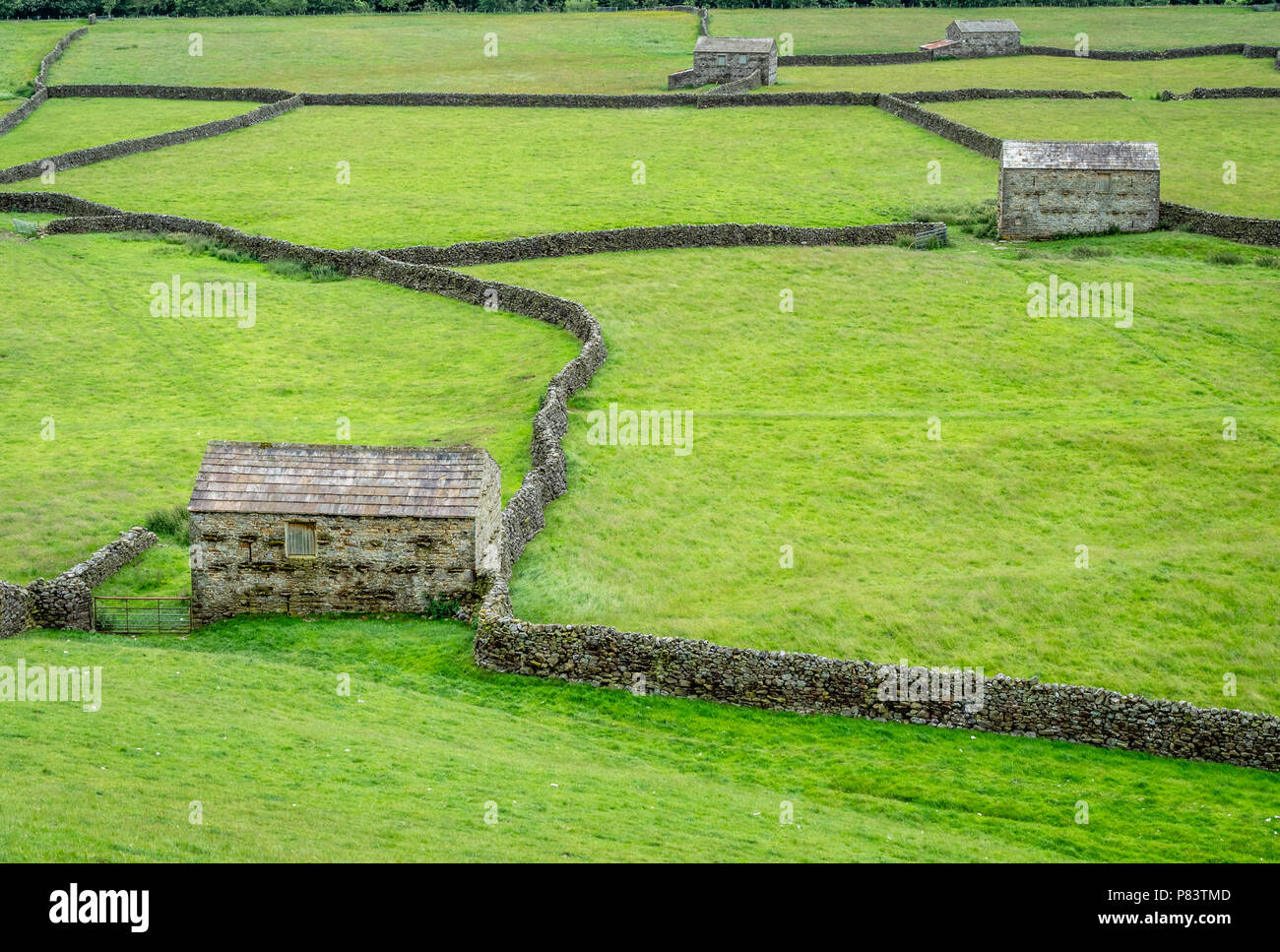 Field barns built to house overwintering cattle at Gunnerside Bottoms in upper Swaledale in the Yorkshire Dlaes UK Stock Photo