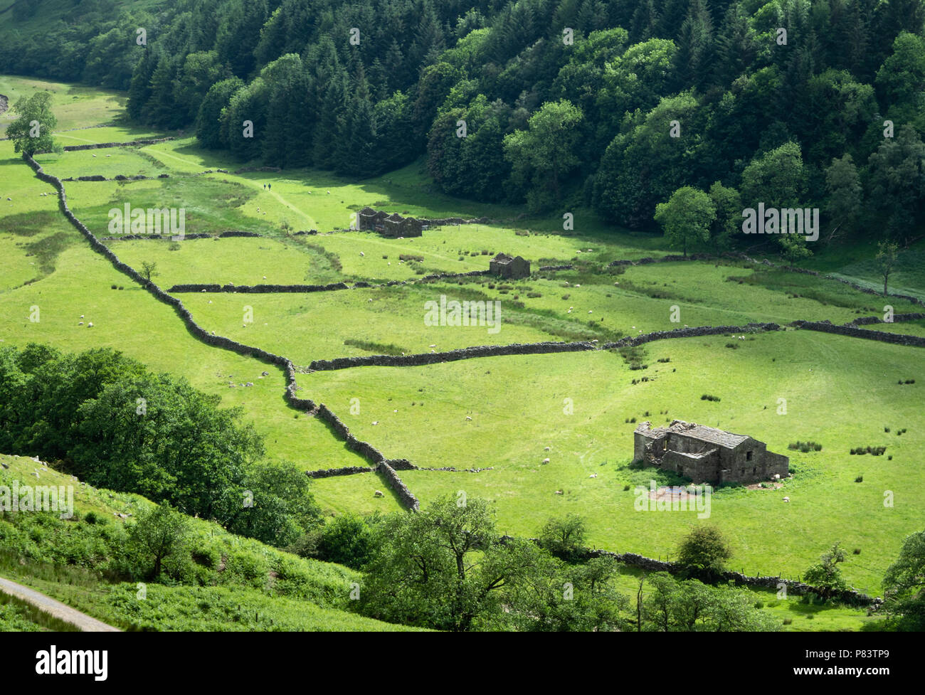 Two distant walkers passing the field barns and dry stone walls of beautiful upper Swaledale in the Yorkshire Dales UK - Stock Image