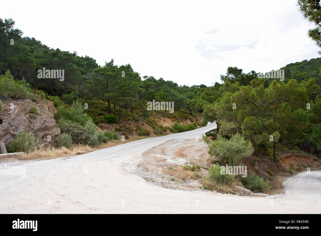 Naaldbos op Lesbos; Pine forest on Lesvos - Stock Image