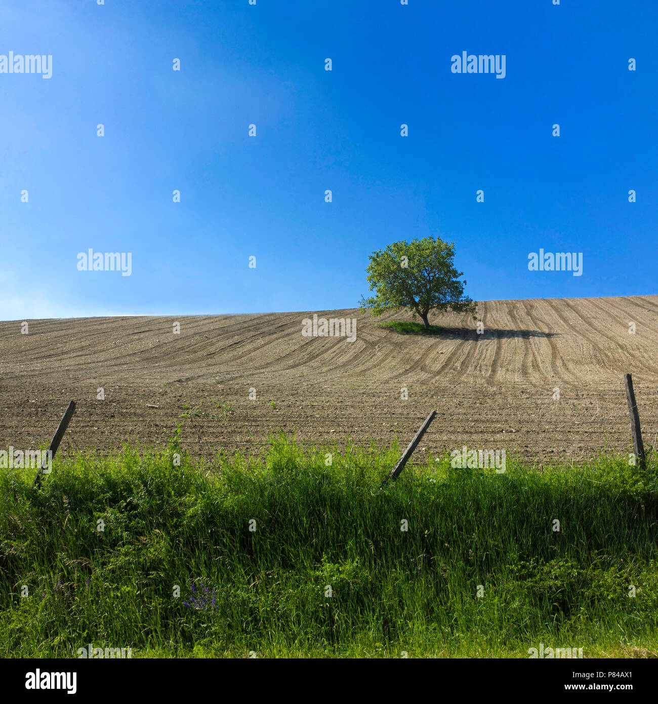 Tree in a ploughed field closed by a barbed wire.  Auvergne. France - Stock Image