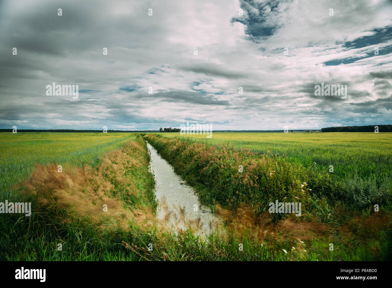 Countryside Landscape With Ameliorative Canal Ditch In Green Agricultural Field Meadow. Summer Cloudy Day. Stock Photo