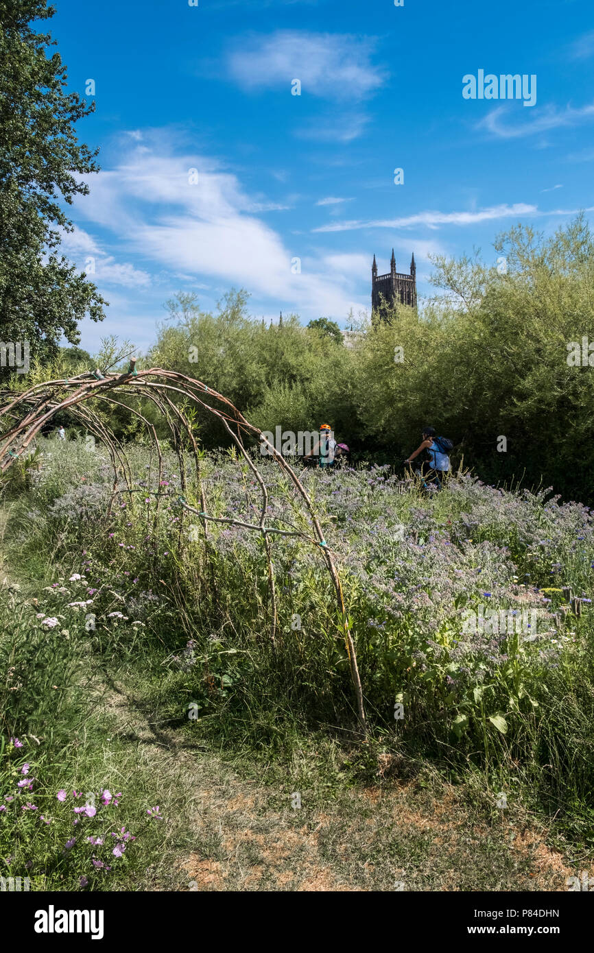 Wild flowers and willow arch on Bromwich Parade, a tranquil public walkway, with Worcester Cathedral in background, Worcestershire, West Midlands UK Stock Photo