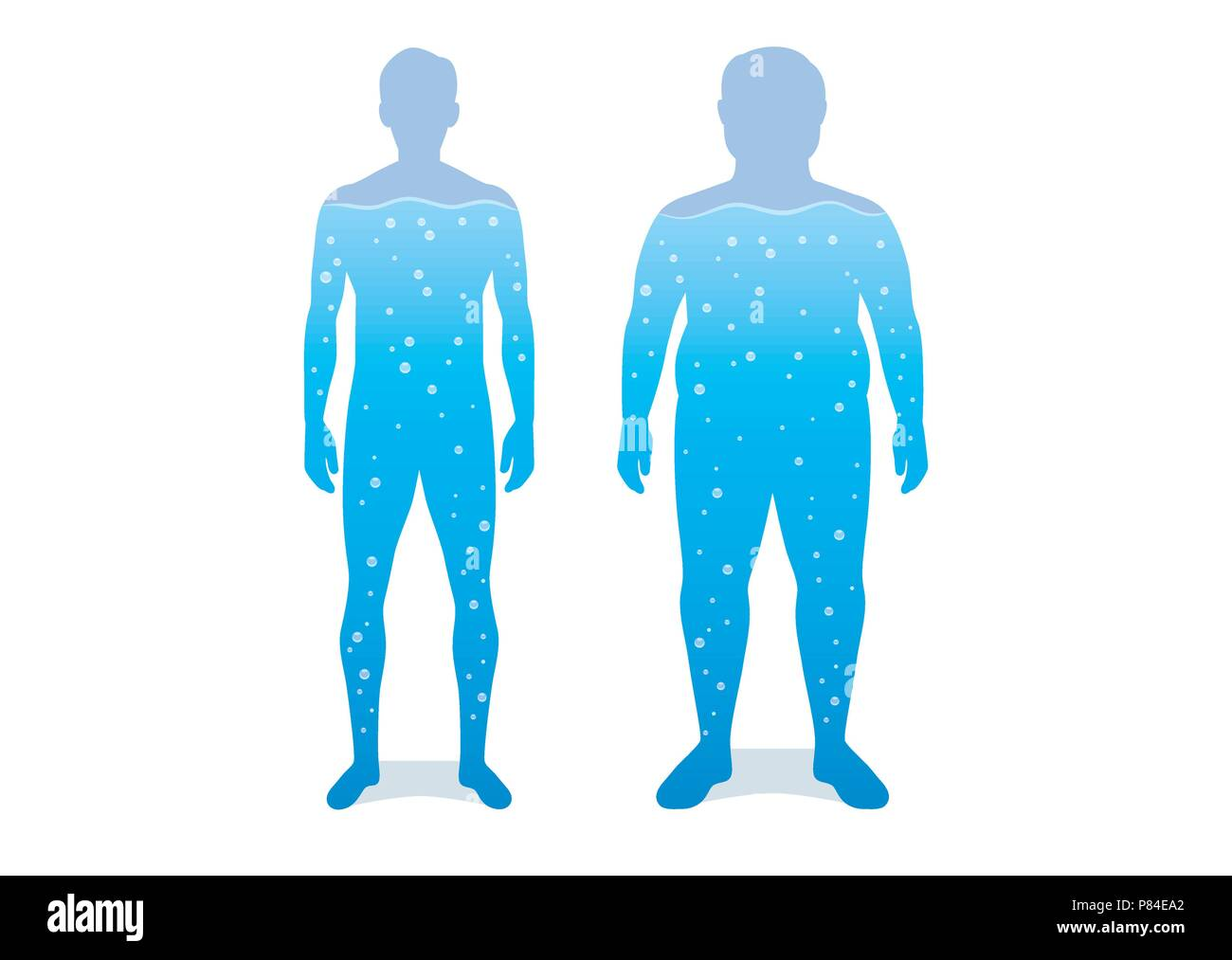 Water in difference body between shapely man and fat. - Stock Image