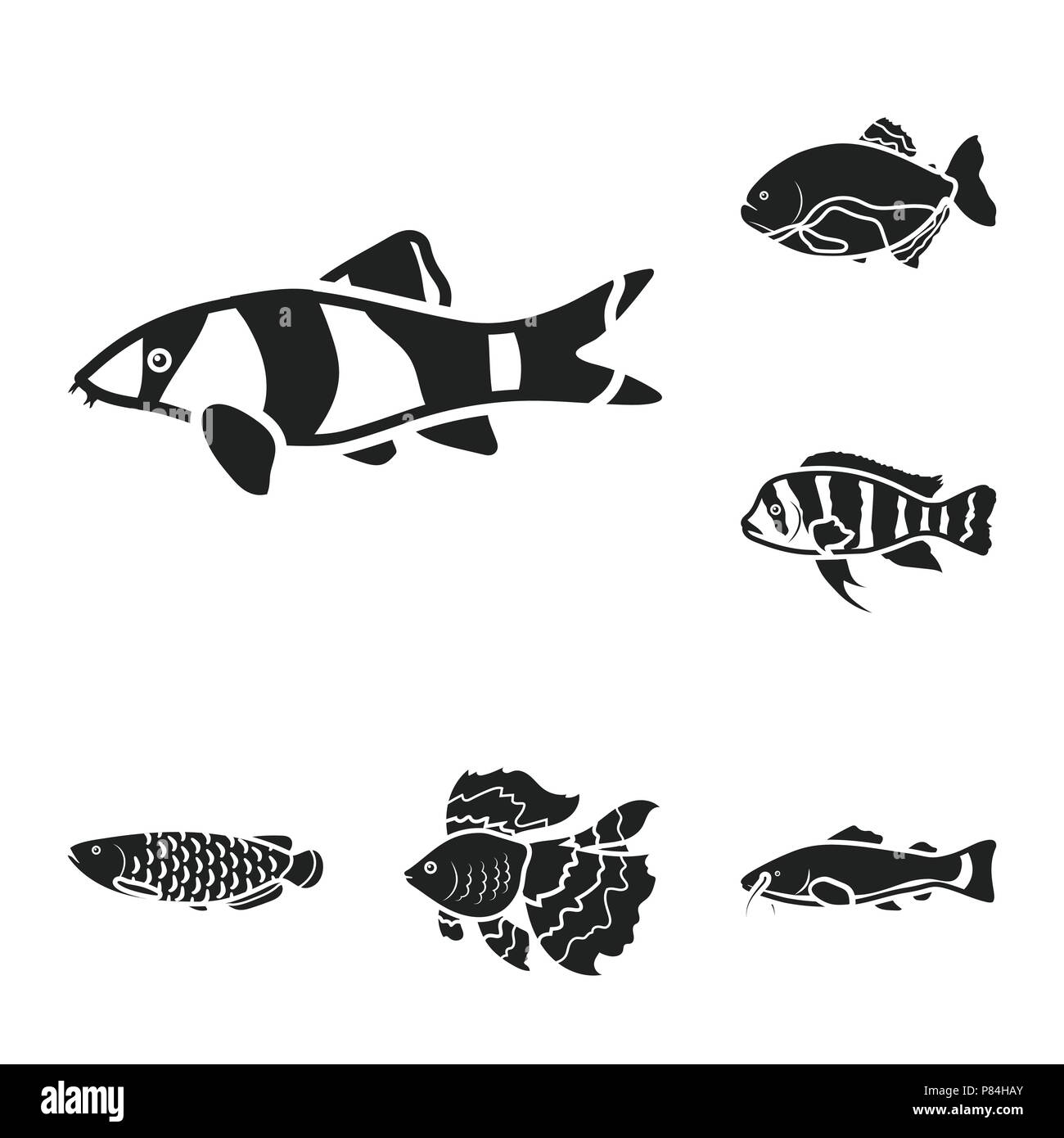 Different Types Of Fish Black Icons In Set Collection For Design
