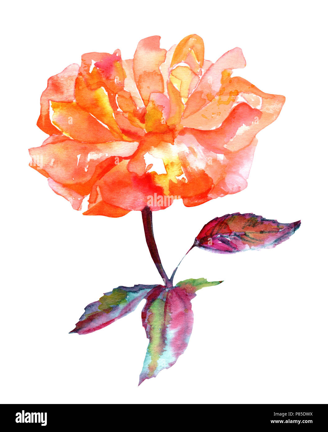 Watercolor Drawing Of Vibrant Rose Flower Isolated On A White