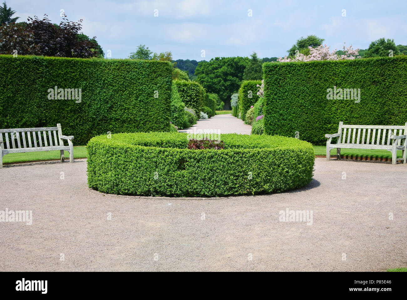 Yew hedging and seats at RHS Rosemoor Gardens, Devon, UK - John Gollop - Stock Image