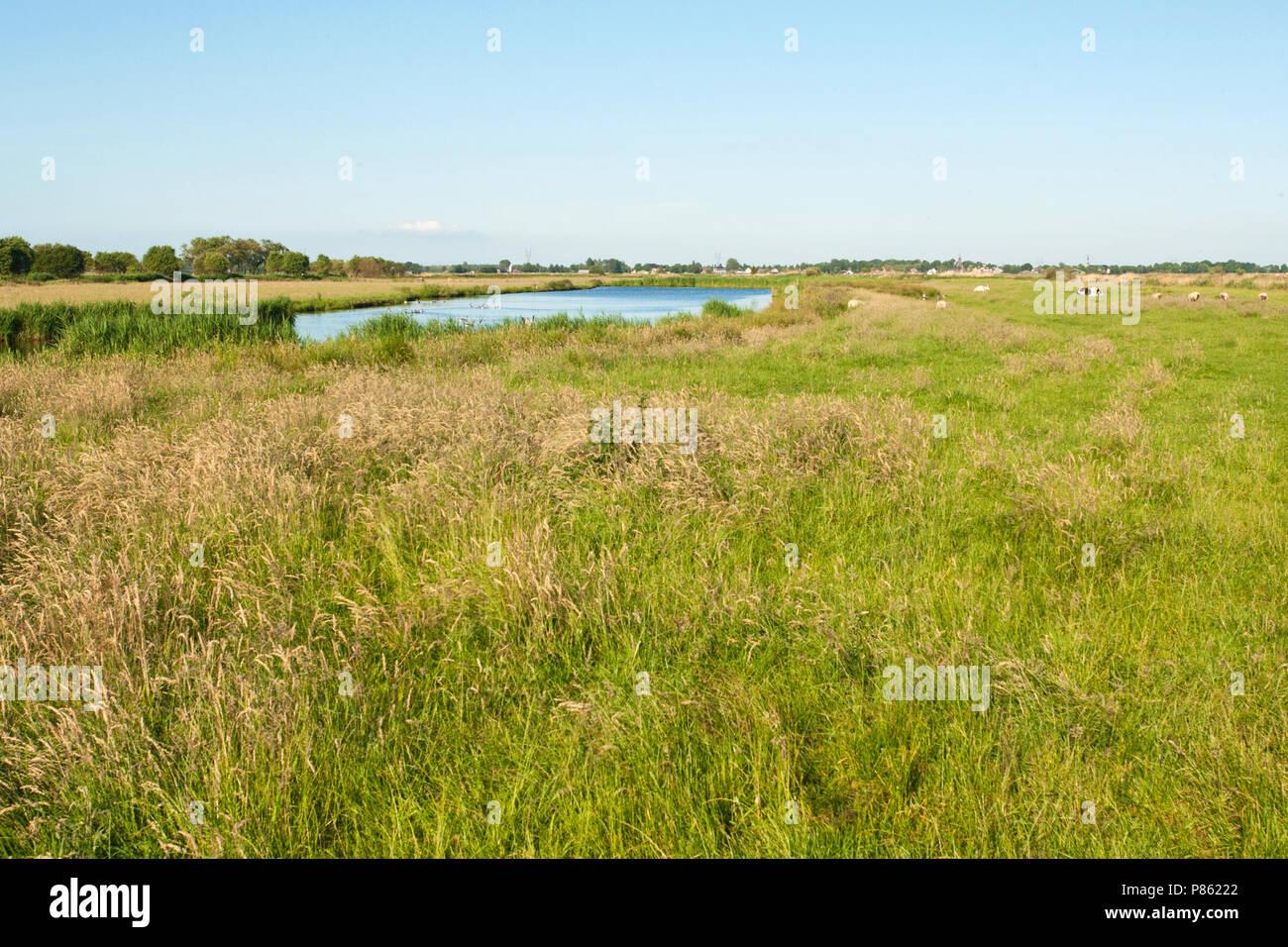 Ilperveld, Noord-Holland; Ilperveld, Netherlands - Stock Image