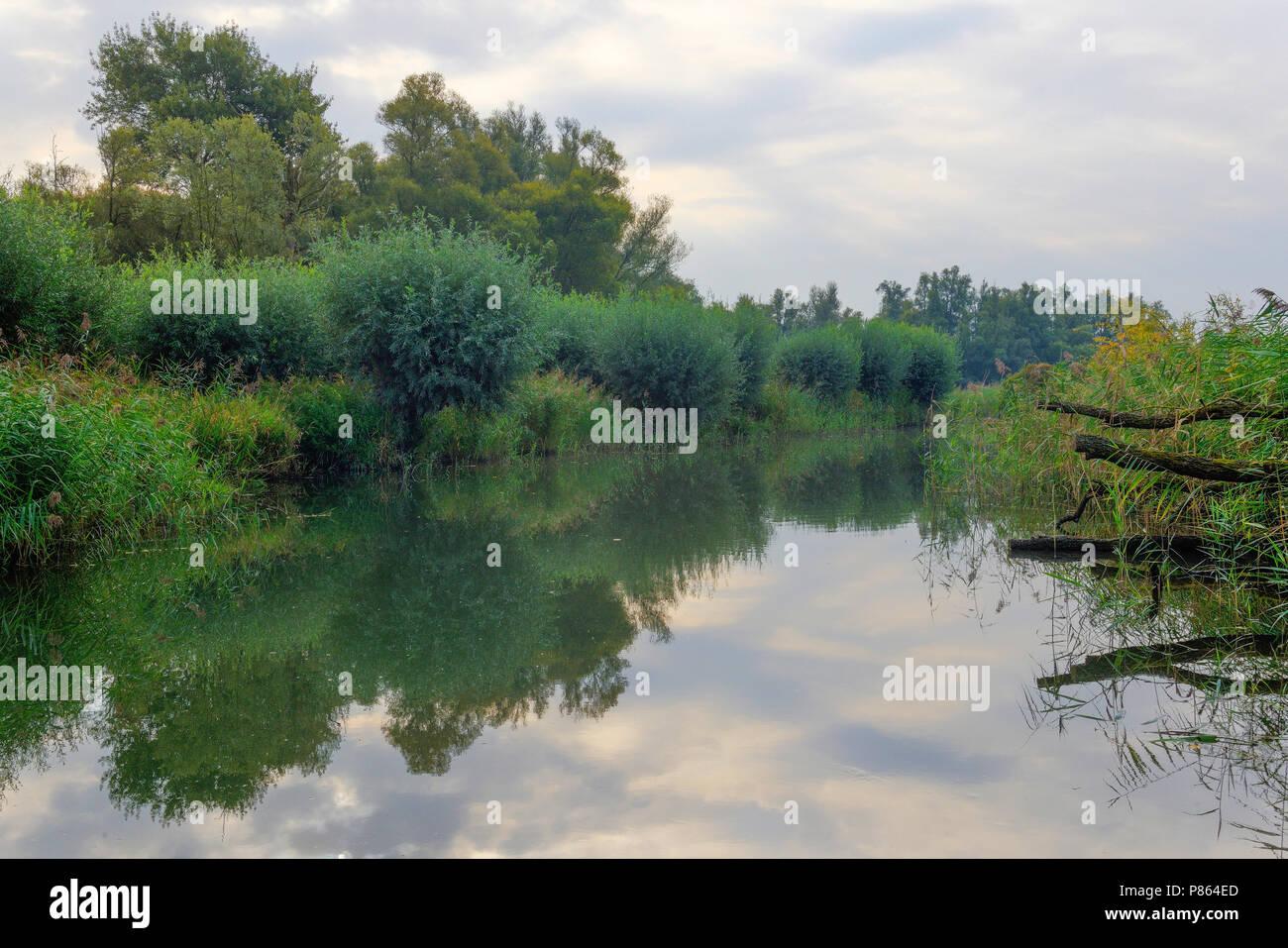 Weerspiegeling, Reflection Biesbosch - Stock Image