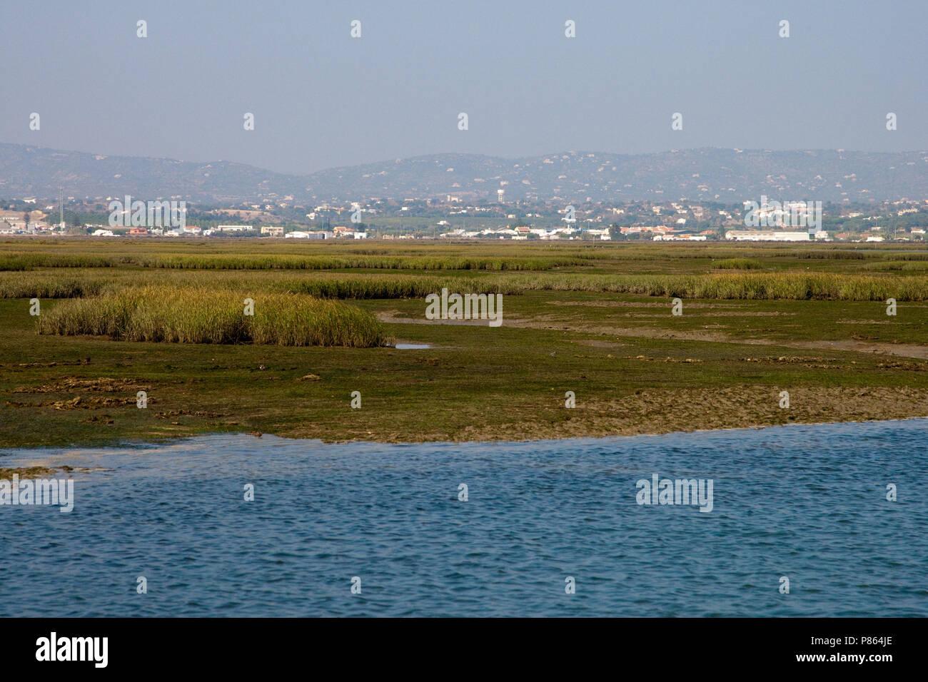 Ria Formosa lagoon is een rust- en foerageergebied voor trekvogels; Ria Formosa lagoon is a important stop over site for migrating birds - Stock Image