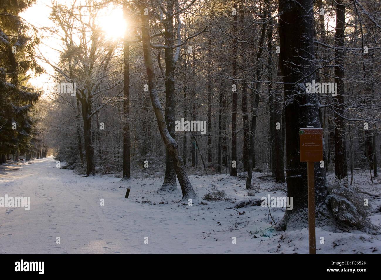 Winter in het Staatsbos; Winter at Staatsbos - Stock Image