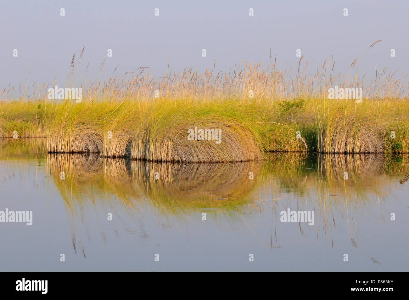 Swamp in Namibia - Stock Image