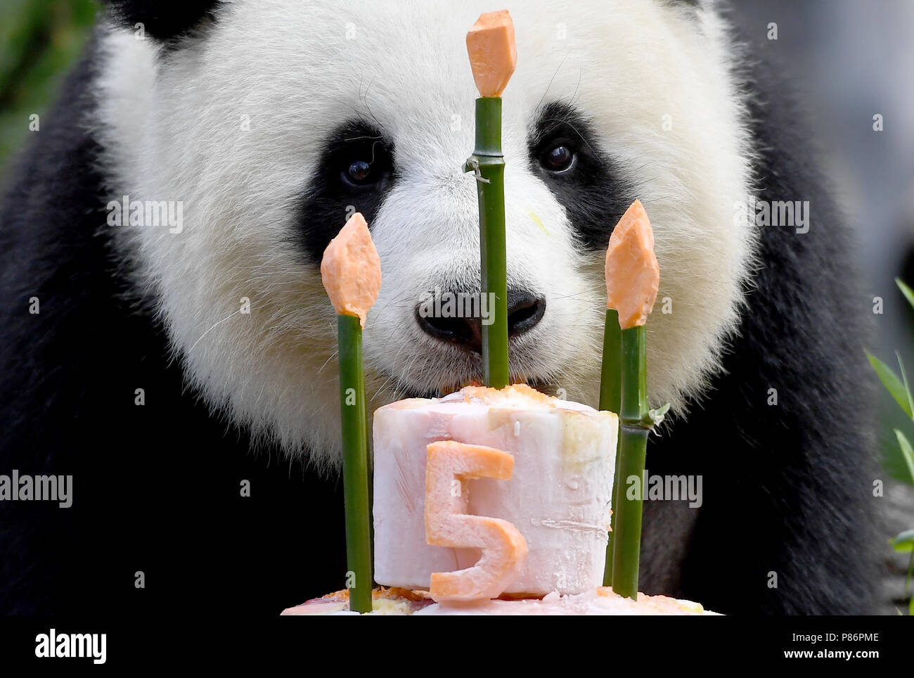 Berlin, Germany. 10th July, 2018. Panda female Meng Meng takes a look at her birthday cake at her enclosure at the Berlin Zoological Garden. The animal keepers served a sugar-free birthday cake with delicacies like bamboo, apples, carrots and ice on the occasion of her fifth birthday. Together with the male panda Jiao Qing the panda female Meng Meng from a reserve in Chengdu lives at the Berlin zoo as a Chinese 'loan'. Credit: Britta Pedersen/dpa-Zentralbild/dpa/Alamy Live News - Stock Image