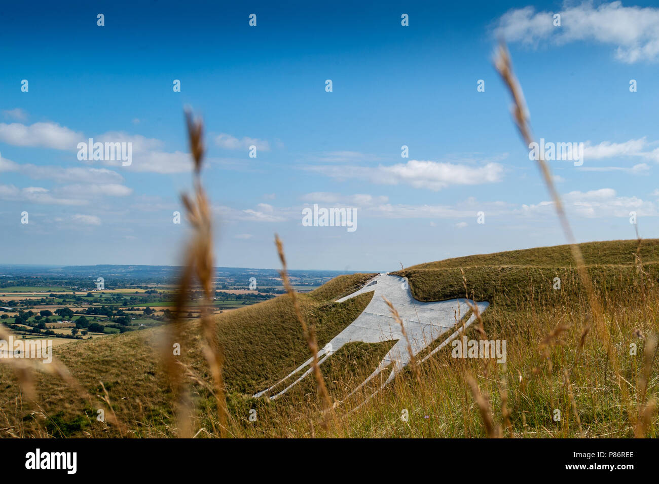 Westbury White Horse during the summer heatwave 2018 Stock Photo