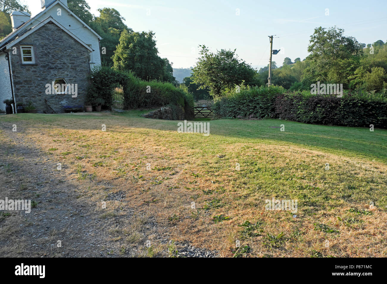 Parched lawn outside a rural home during the 2018 summer heatwave in Carmarthenshire Wales UK  KATHY DEWITT - Stock Image