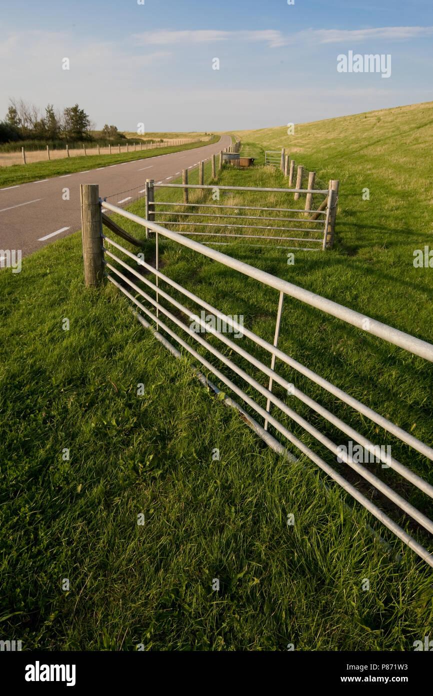 Typisch Texels landschap; typical Texel landscape - Stock Image