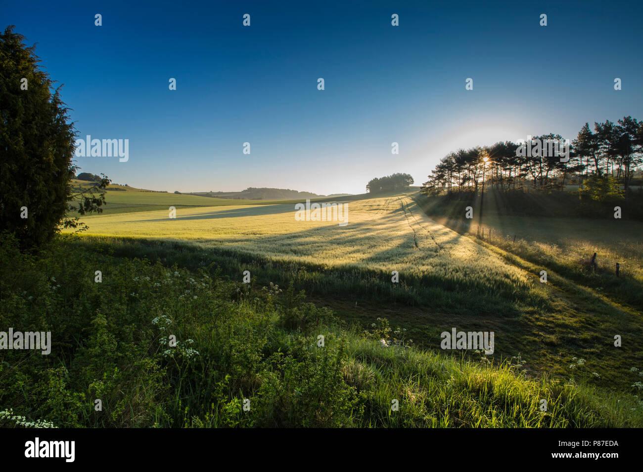 Graanakker in Duitsland, Corn field in Germany - Stock Image