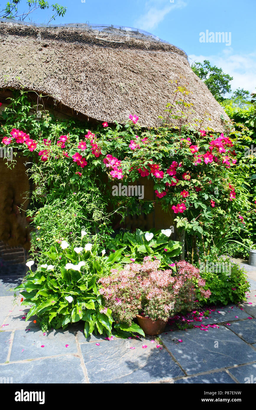 The picturesque thatched summerhouse at RHS Rosemoor Gardens, Torrington, Devon, UK - John Gollop - Stock Image