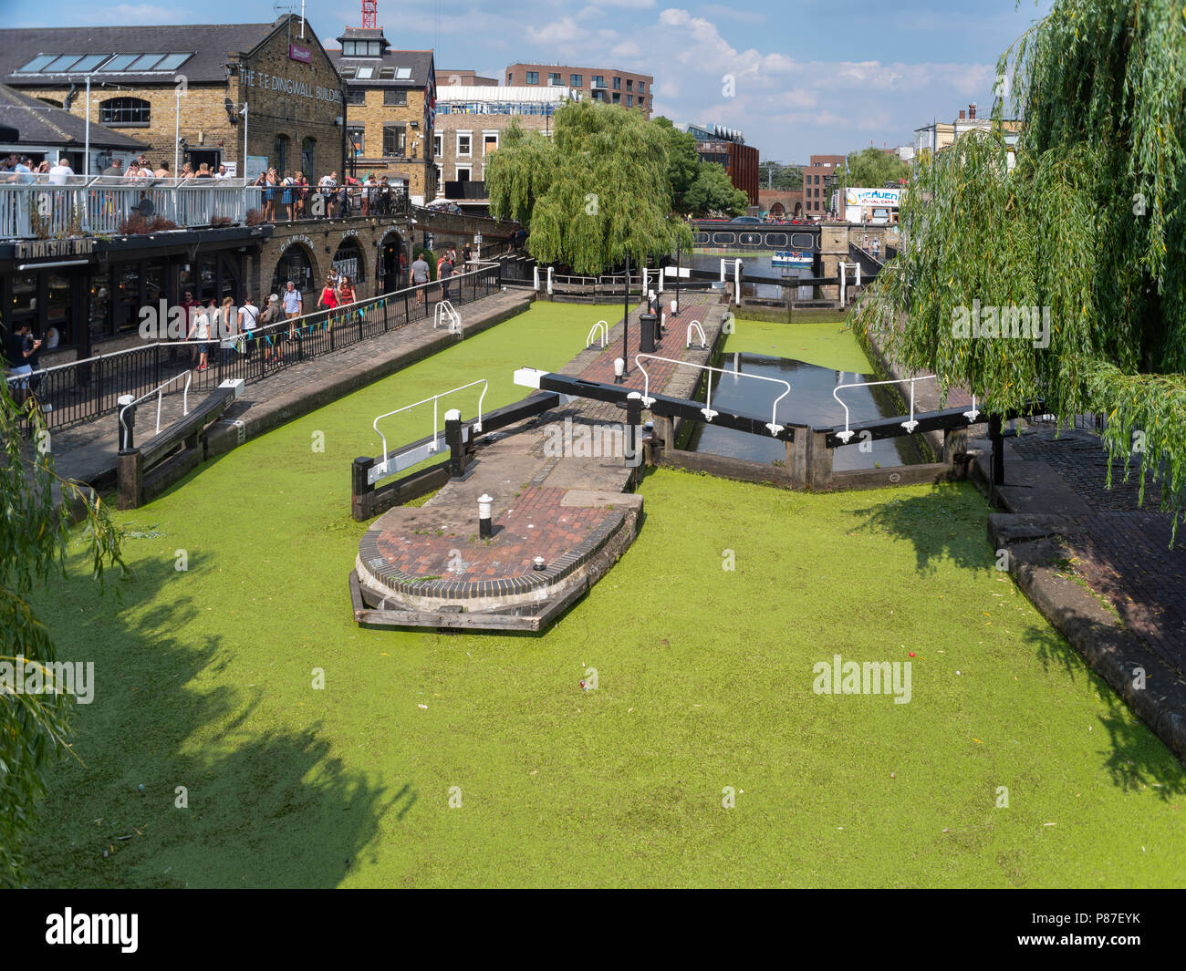 July 2018, Camden Lock, Camden Town, the very hot weather has stimulated the growth of green algae which now carpets the surface of the Regents Canal. - Stock Image